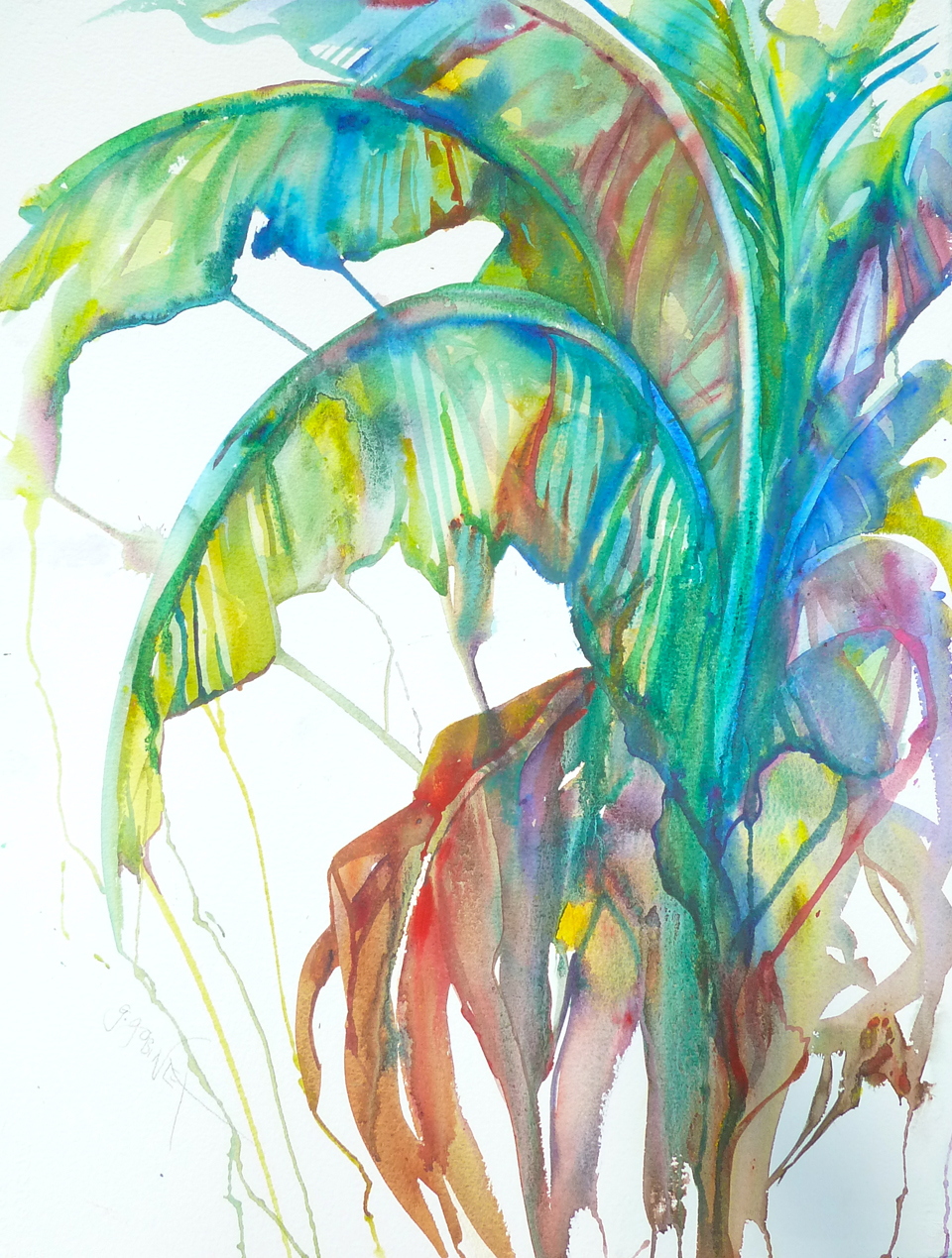 "Red Banana Palm. Watercolour/Arches Deckle Edges 22x30""  56x76cm 300lb/650gm DW06"