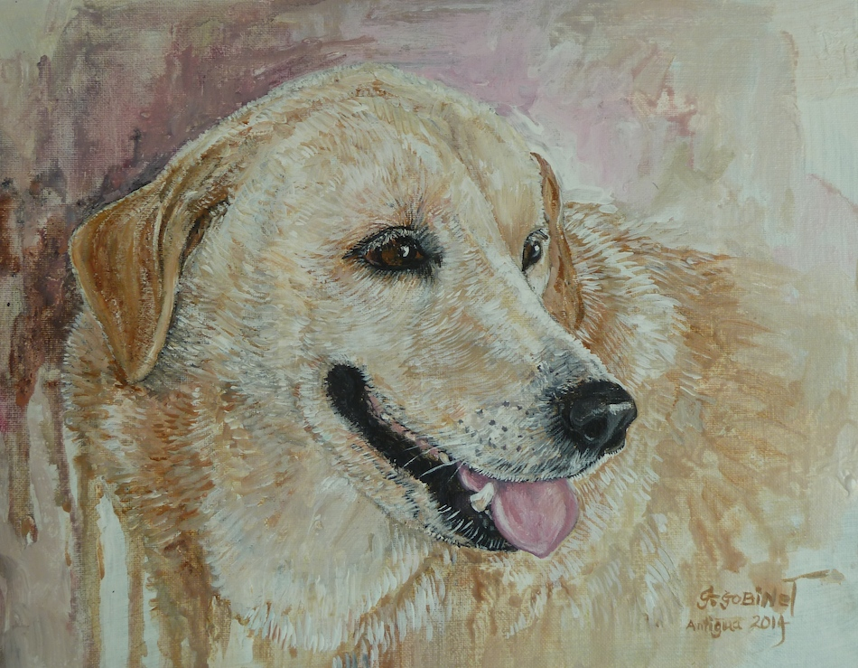 Yellow Labrador Goldie