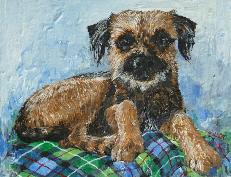 Border Terrier Biggles on his tartan rug