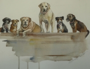 Carrie's Canine Colony
