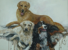 Bernese Mountain Dog with two Golden labradors